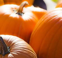 Pumpkins aren't just for Halloween